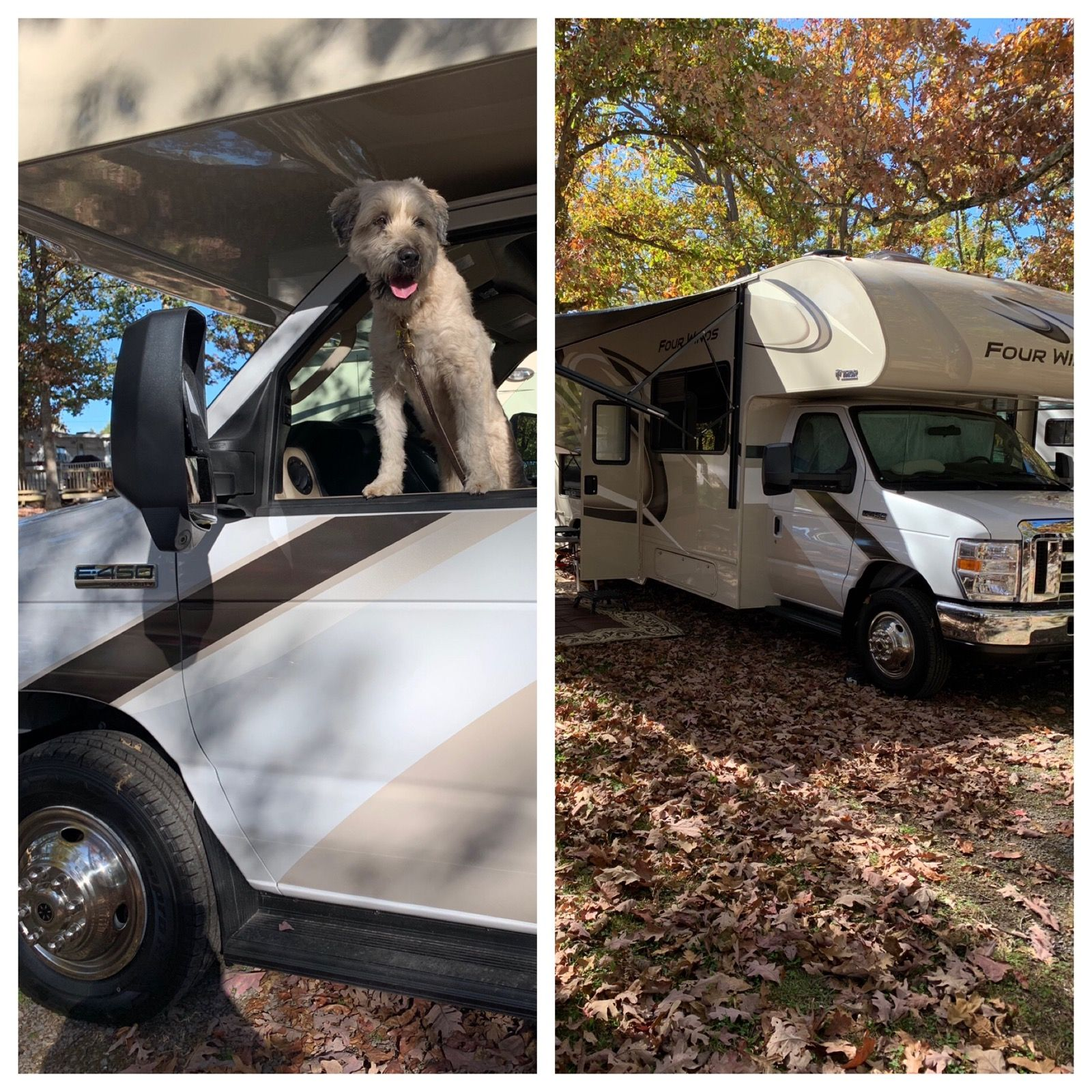 This Four Legged Happy Camper Maggie Was Loving His Second Trip