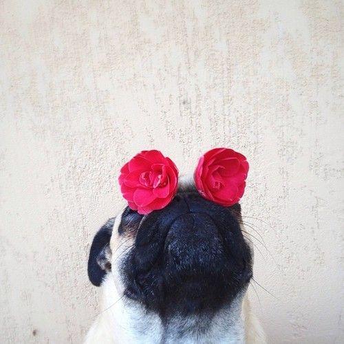 Flower Pug