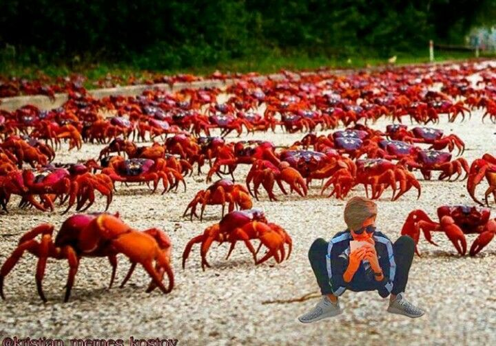 millions of crabs on christmas island many visitors visit christmas island during christmas however to their astonishment millions of crabs had covered