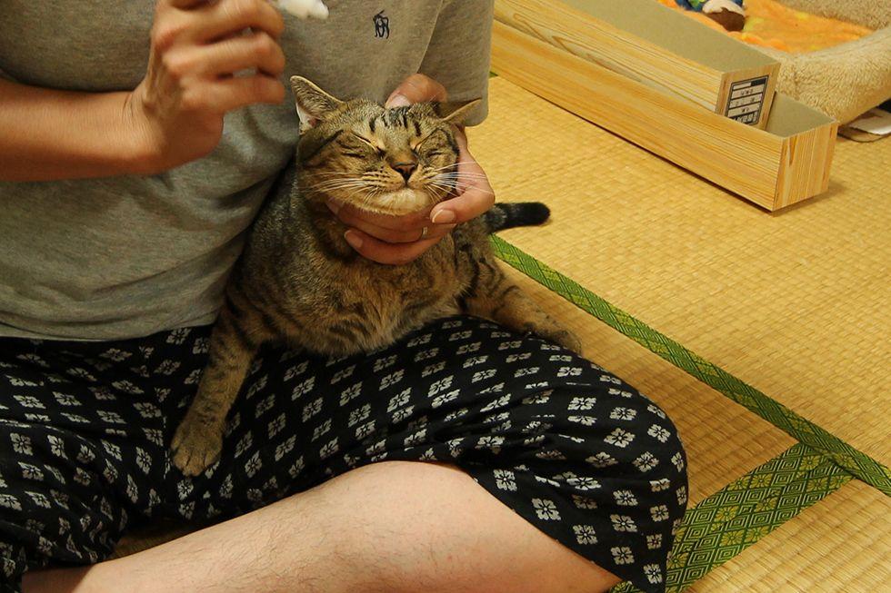 Eyewash,eye drop, eye wash, cat, munchikin, Riki