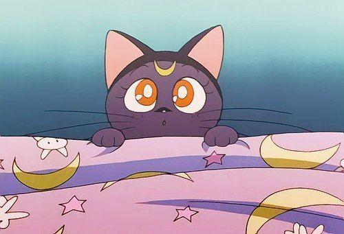 Anime Cat And Luna Image Sailor Moon Wallpaper Anime Sailor Moon