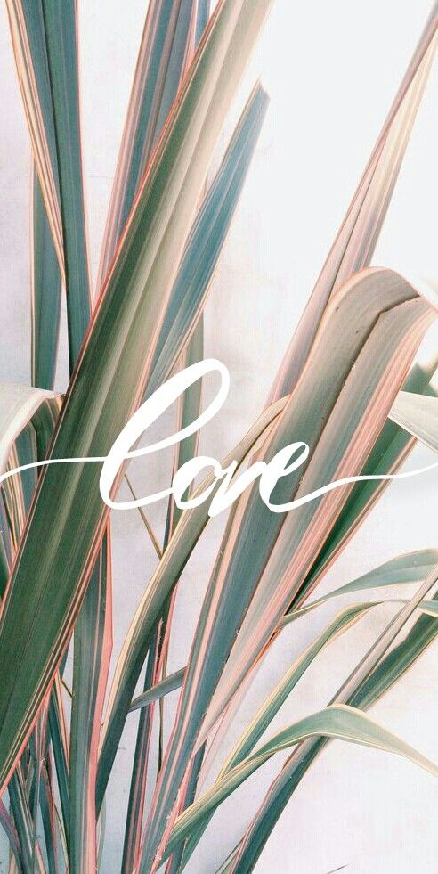 pastel colors wallpaper hd made by me plants love wallpaper quotes