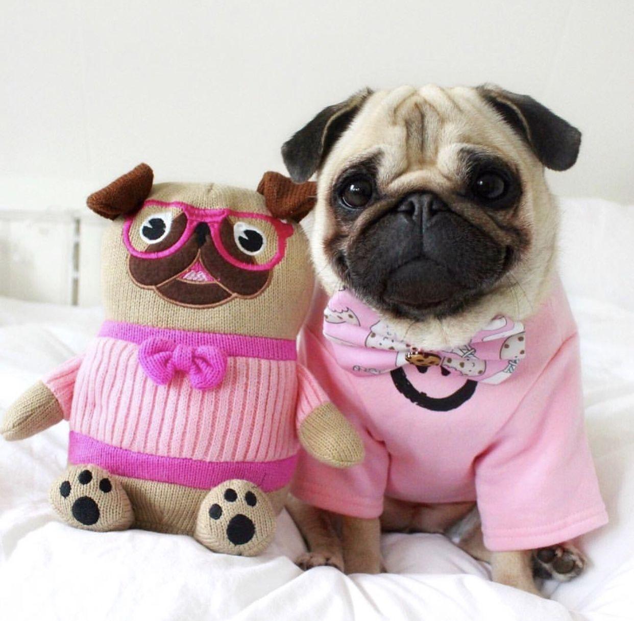 Pin de Linda Hanback en pugs | Pinterest | Perritos adorables, Pug y ...