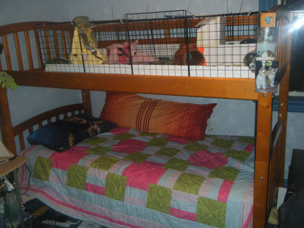 Awesome ideas for guinea pig hutch and cages diy guinea for Diy c c guinea pig cage