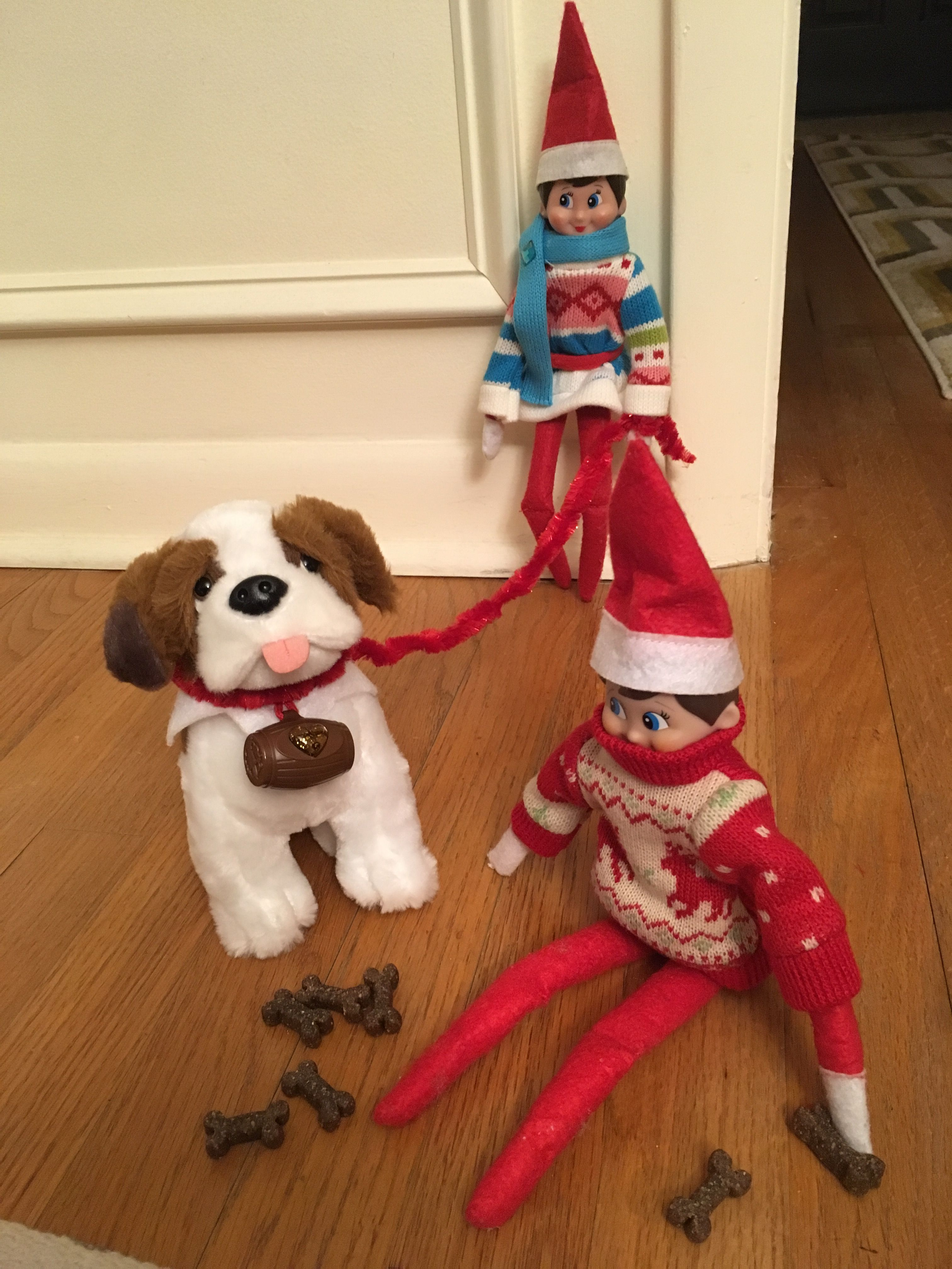 Elf on the shelf. James and Meebles walking their St