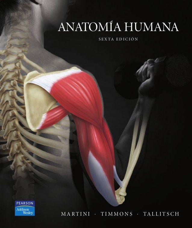 Moderno Anatomía Martini Y Octava Edición Fisiología Bosquejo ...