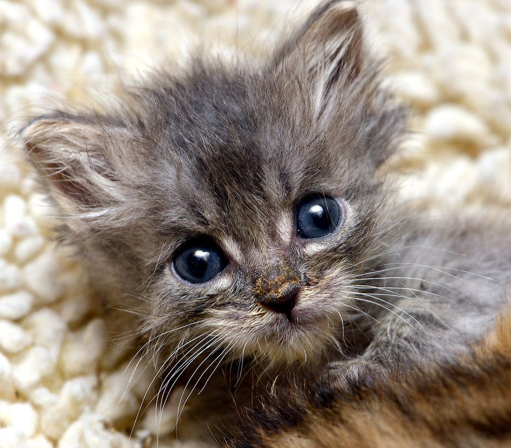 I can see forever in your eyes. Kittens cutest, Newborn