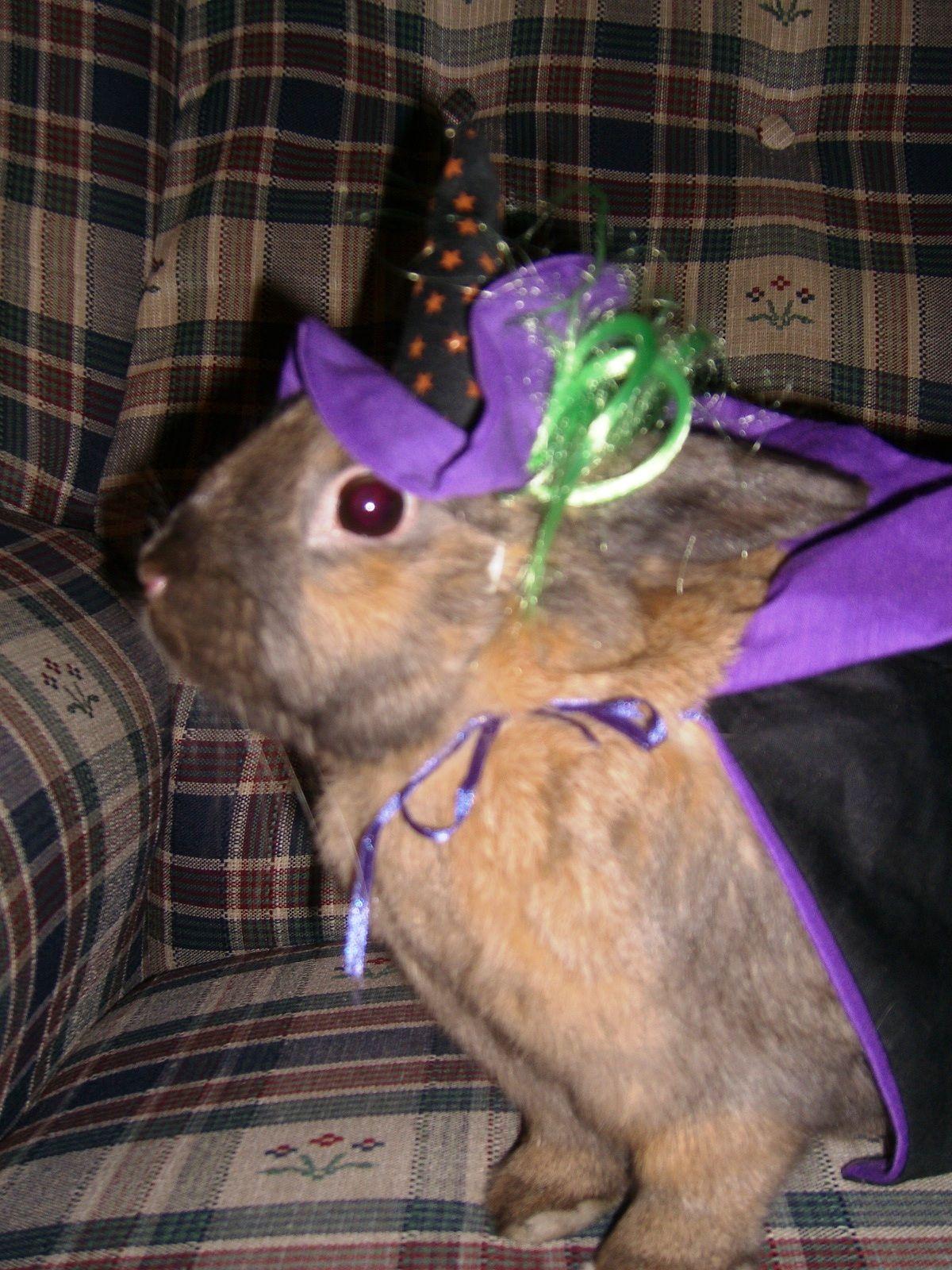 Bunny Halloween Costume so cute! bunny careatcare