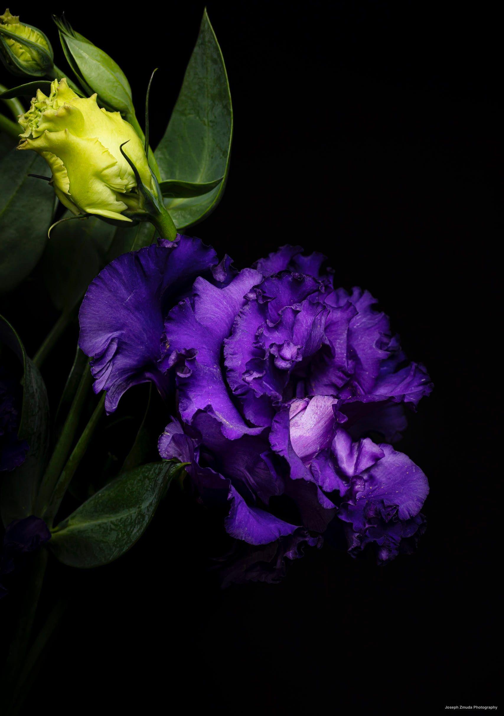 Ruffled Petals Purple Lisianthus Flowers Plants Photography Photographers Macro Macrophoto In 2020 Good Morning Flowers Flowers Photography Pretty Flowers