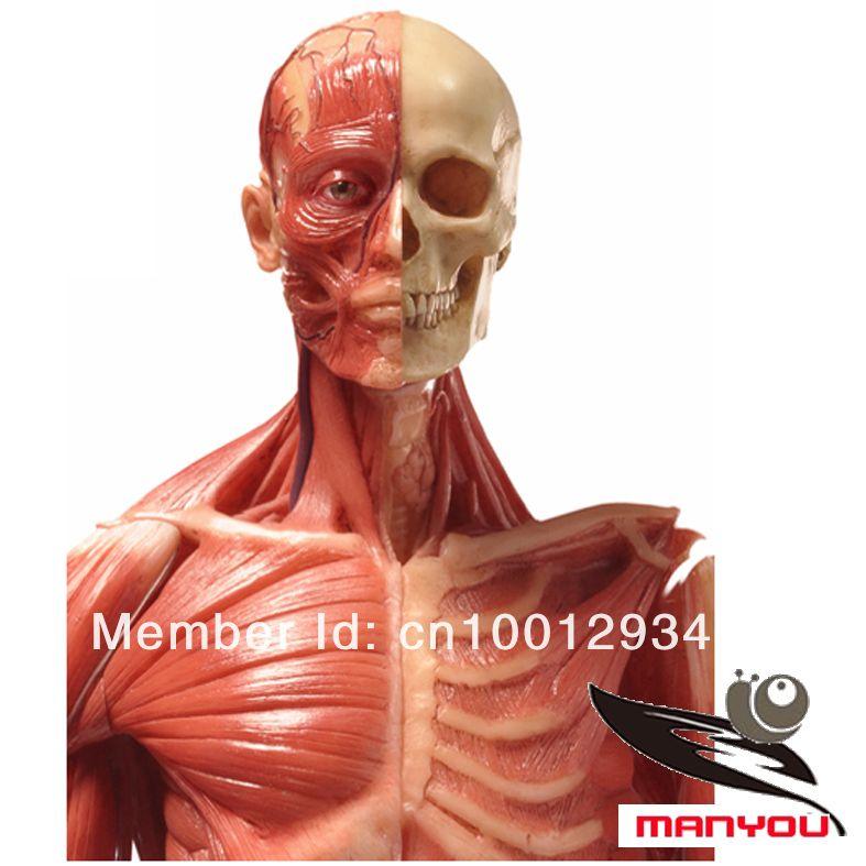 female bone anatomy - Google 검색 | Art Doll Anatomy, Products, Tips ...