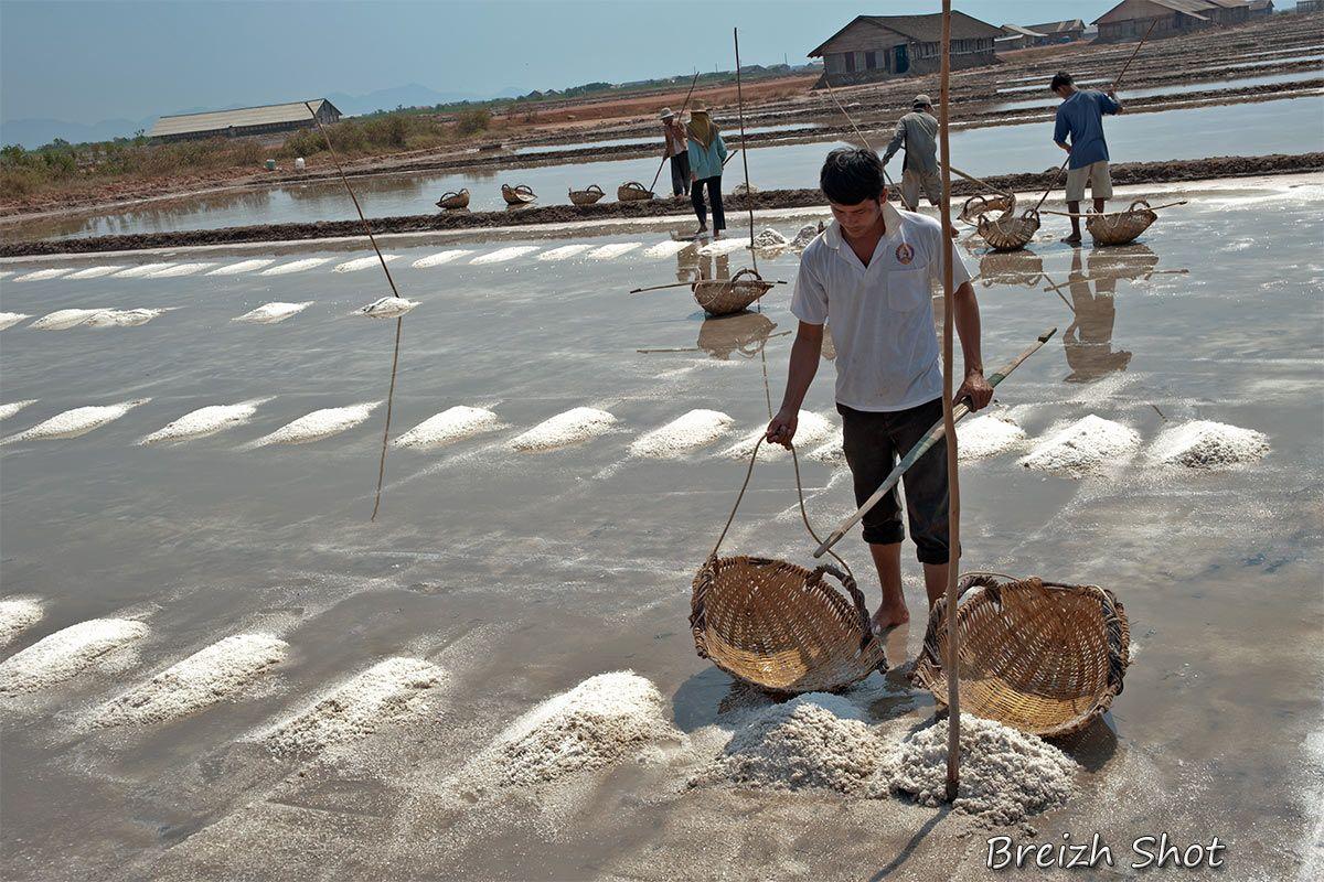 Le dur labeur des paludiers dans les marais salants de Kampot