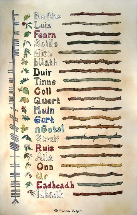 An overview of the Ogham alphabet   Watercolors and ink on paper