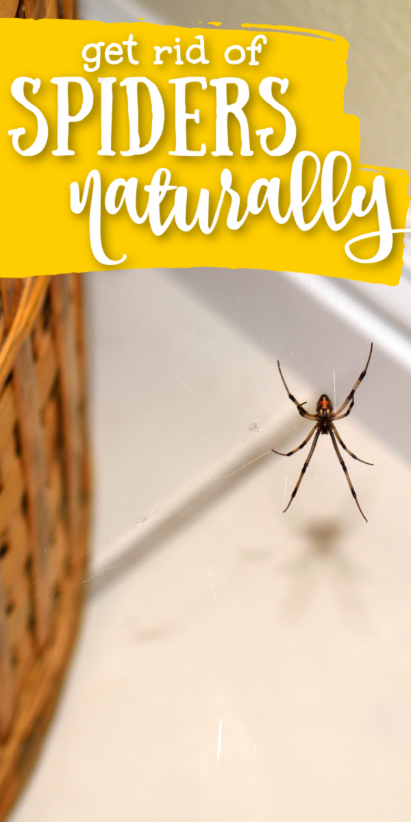 1dd9b09ec36e9f408bf37012aefcee51 - How To Get Rid Of Spiders From Your Car