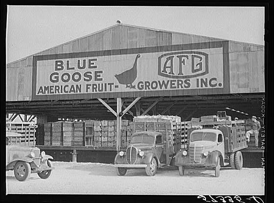 Truckloads Of Celery Arriving At Packing House Belle Glade Florida Old Florida Visit Florida Vintage Florida