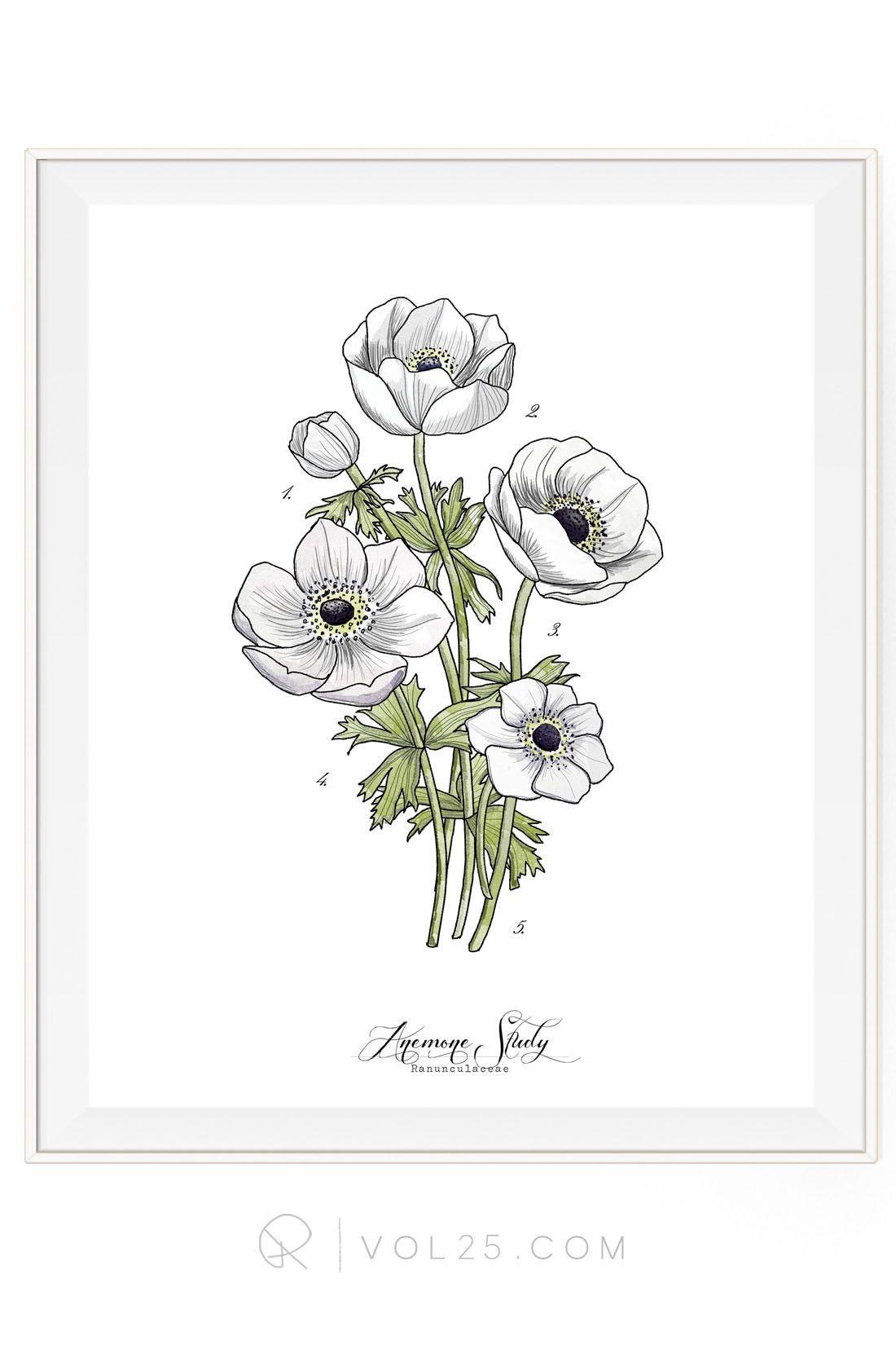 Anemone Flower Drawing : anemone, flower, drawing, Anemone, Study, Vol.1, Scientific, Textured, Cotton, Canvas, Print, Sizes, VOL25, Vol25, Flower, Drawing,, Floral, Sketches