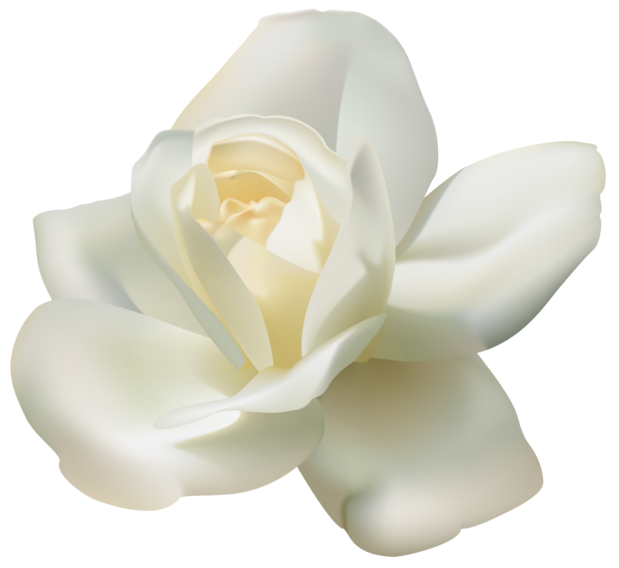 Rose Flower White White Rose Png Image White Rose Png Rose Doodle Flower Bouquet Png