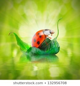 Little traveler on the funny boat. Happy holidays concept. #fresh, #green, #water, #activity, #animal, #background, #beauty, #beetle, #boat, #bug, #cleanness, #close up, #closeup, #creatures, #dew, #ecology, #environment, #funny, #funny animals, #garden, #holidays, #illustration, #insect, #ladybird, #ladybug, #lake, #leaf, #leisure, #natural, #natural background, #nature, #outdoor, #recreation, #sailing, #sea, #season, #seasonal, #ship, #sport, #spring, #springtime, #summer, #travel, #traveler,