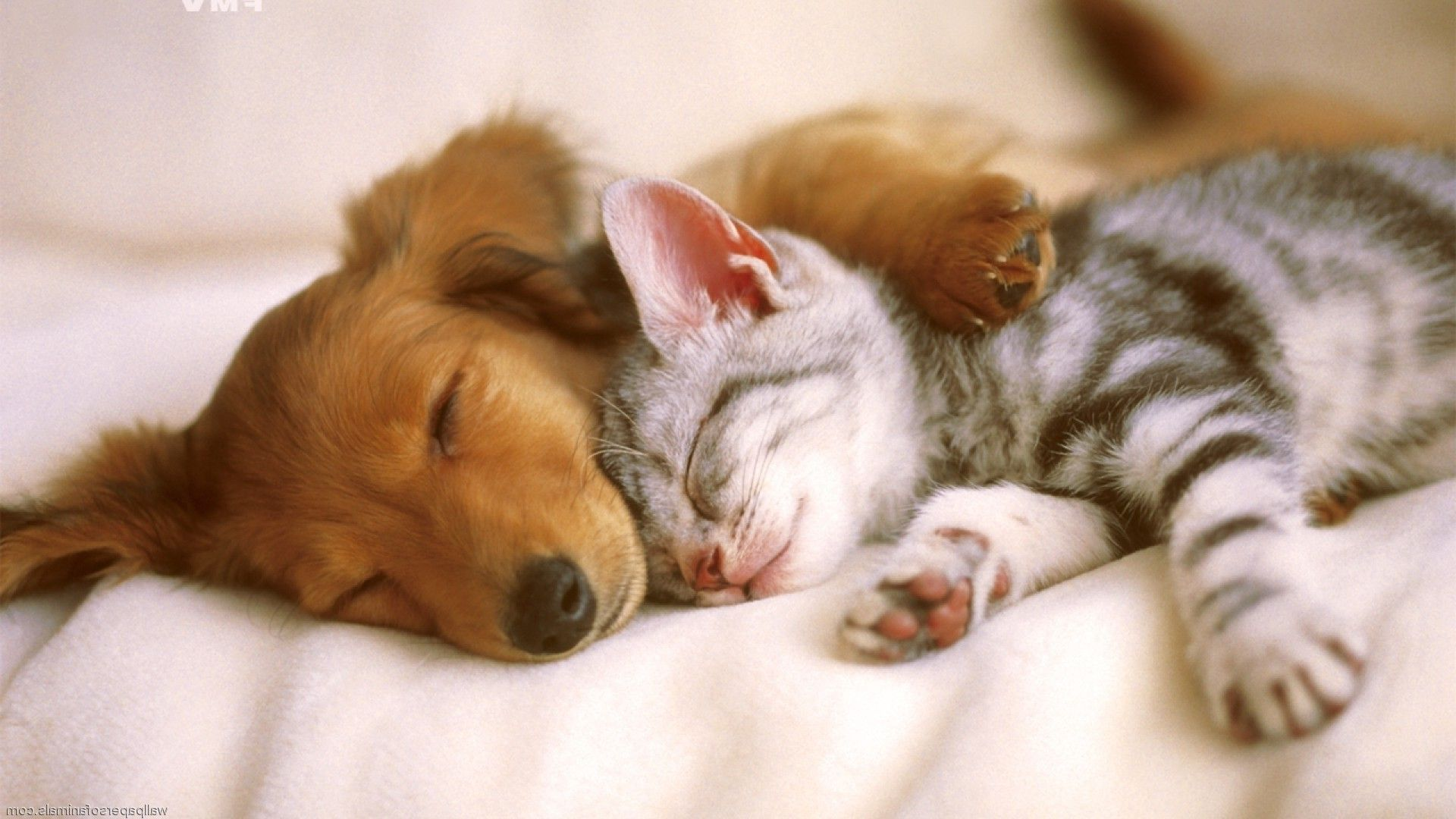 Cats And Dogs Wallpapers Wallpaper Cave Cute Puppies And Kittens Kittens And Puppies Cute Animals Puppies