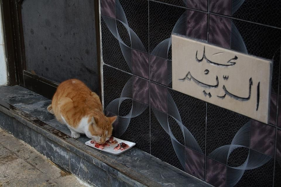 A Lucky Cat قط محظوظ Aleppo Syria Animals Of The World Aleppo
