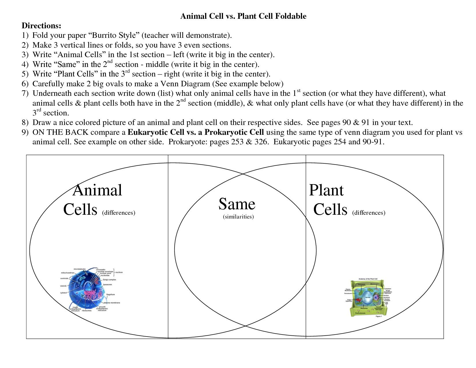 Plant Animal Cell Venn Diagram Luxury Animal Cells And