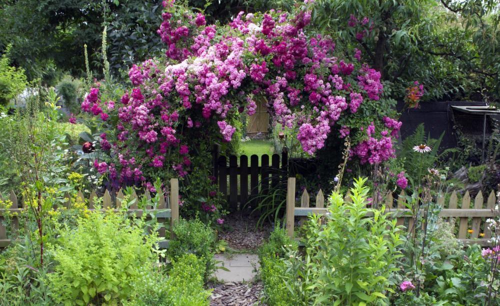 kletterpflanzen für sonne und schatten - ob sonnig, halbschattig,