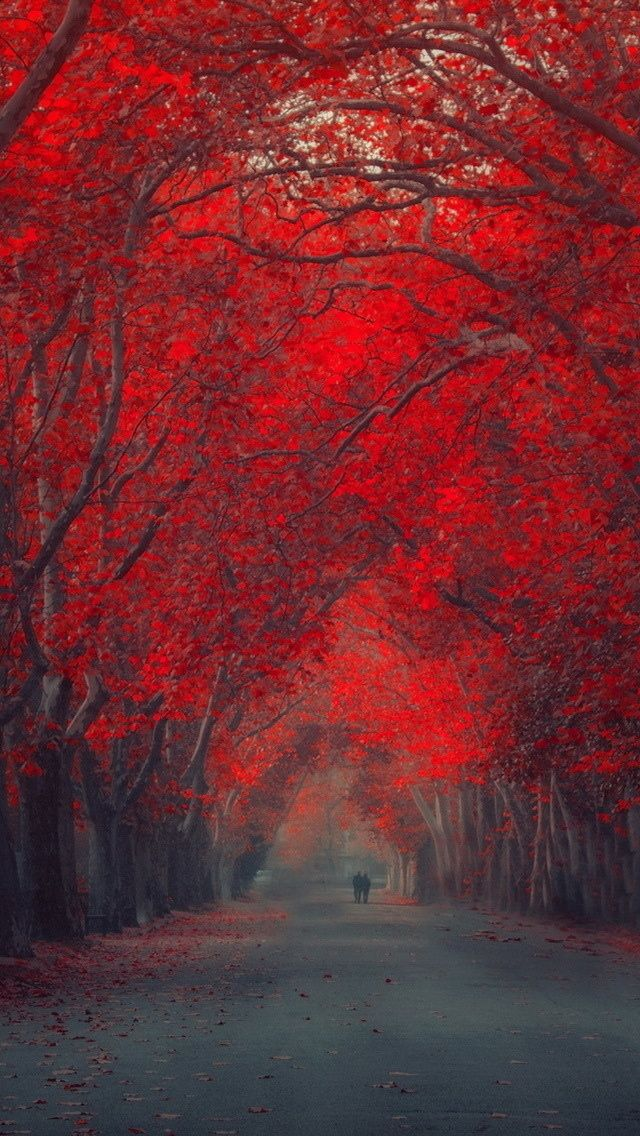Enchanting Iphone 5s Wallpaper Enjoy The Beautiful Wallpapers Iphone Wallpaper Fall October Wallpaper Iphone 6 Wallpaper Beautiful free wallpaper for iphone se