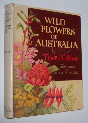 WILD FLOWERS OF AUSTRALIA, by Thistle Y. Harris (With ...