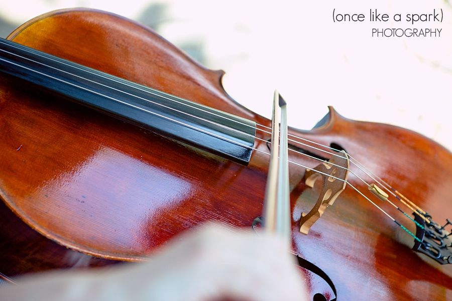Live Music Violin Closeup Musician Wedding Ceremony Musical