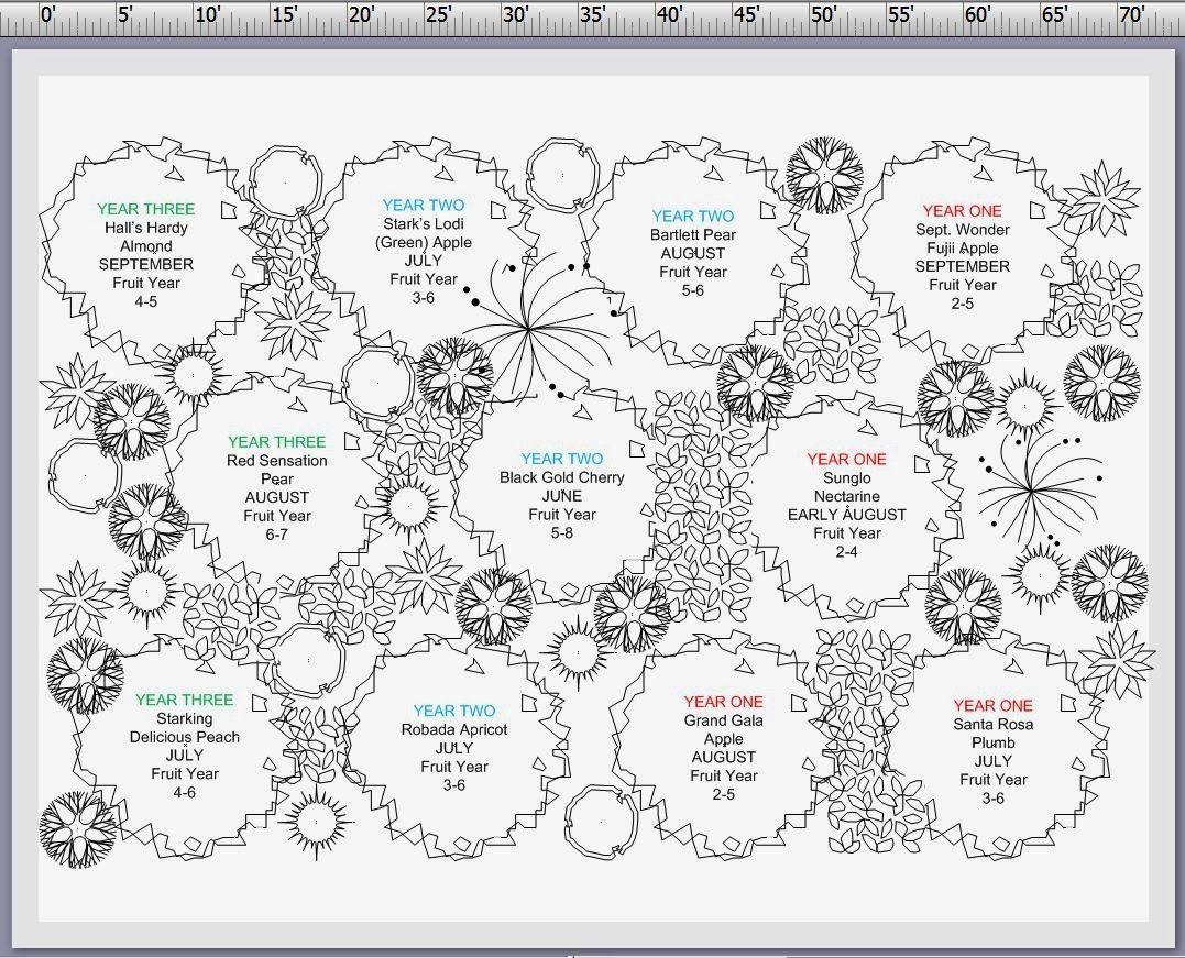 Image Result For Permaculture Fruit Orchard Design Plans