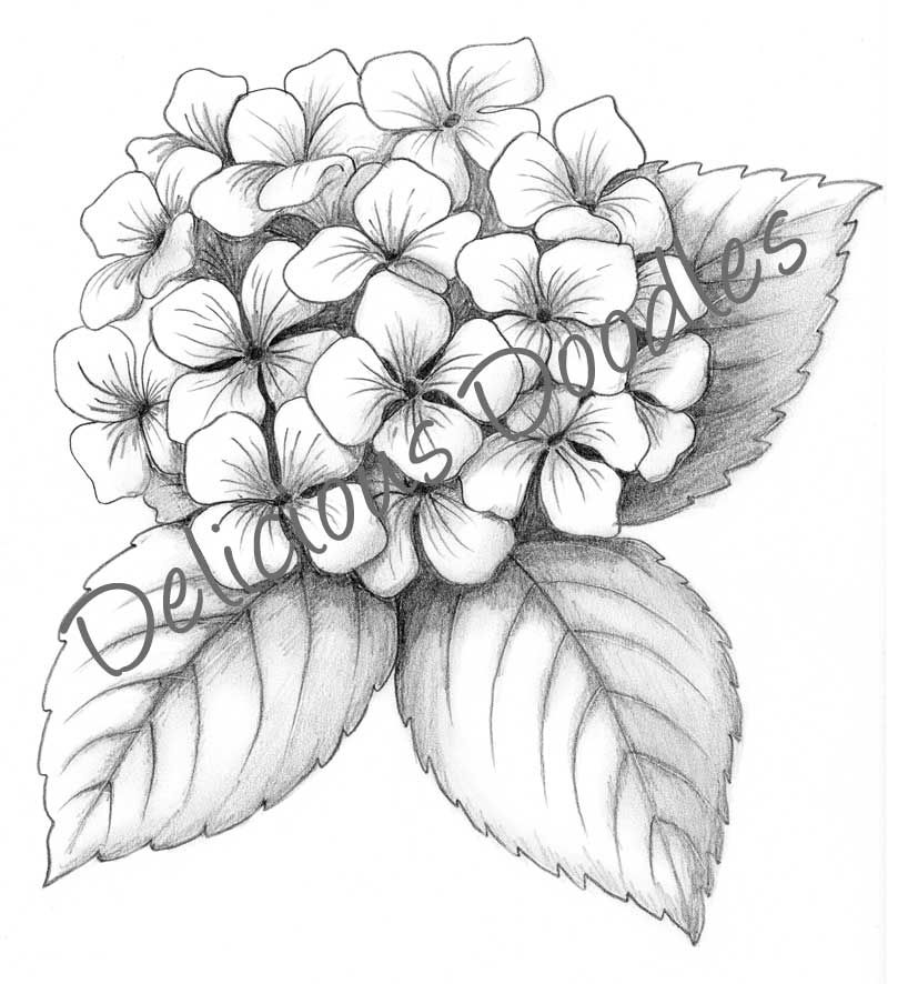 Without The Delicious Doodles Hydrangea Tattoo Drawings Flower Drawing
