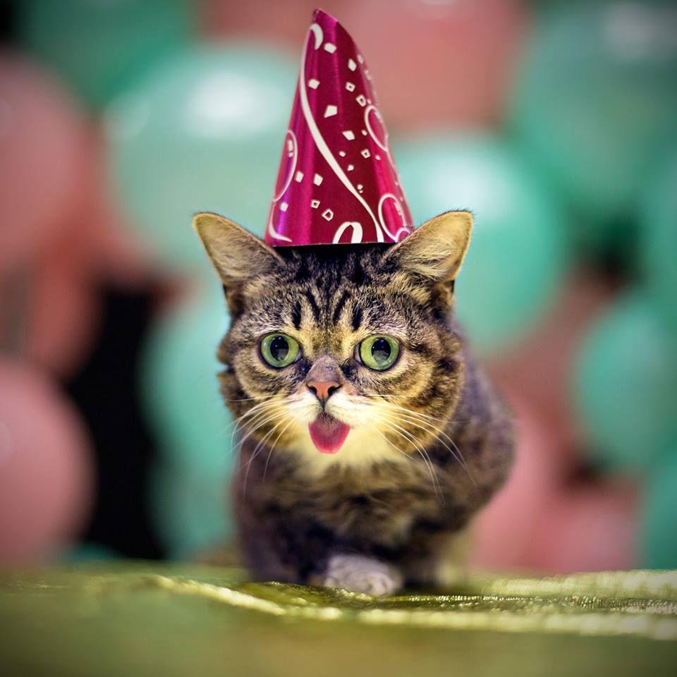 Lil Bub In His Birthday Hat Cat Hats Happy