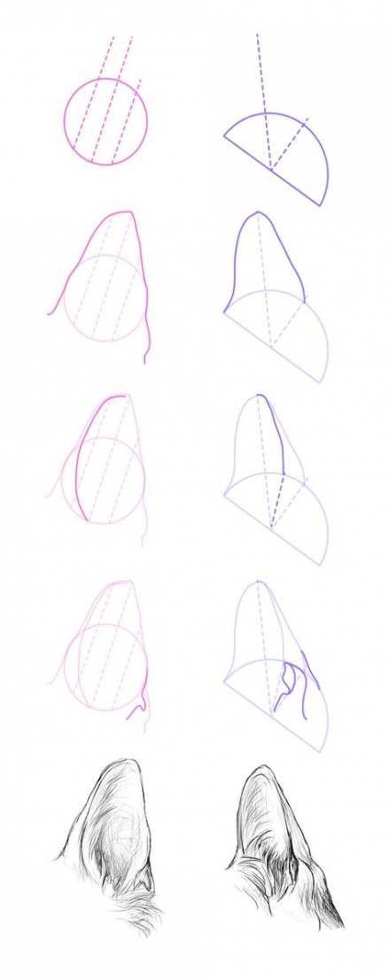 Drawing Animals Realistic Tutorials Anatomy 65 New Ideas Animal Drawings Dog Drawing Drawing Tips