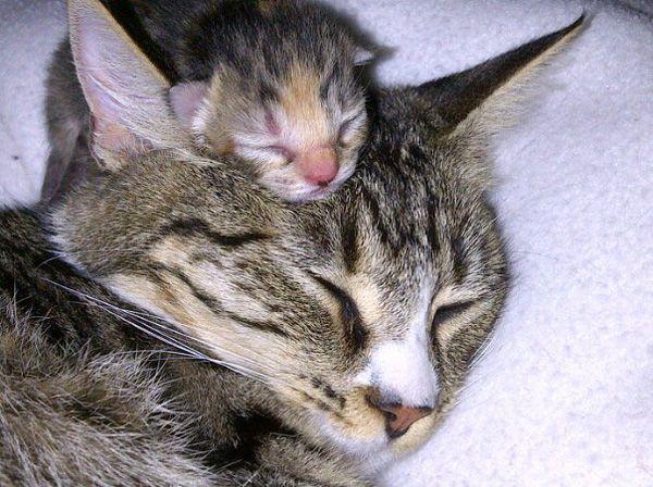 Baby kitty keeping mommy's head warm