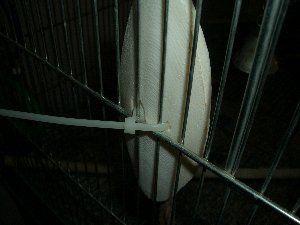"""cuttlebone holder, - købe strips hvor? - bruge en slags """"strips""""/bånd som kan åbnes og lukkes nemt?, så den hurtigt og nemt kan tages af når buret gøres rent. Eller den skal flyttes"""