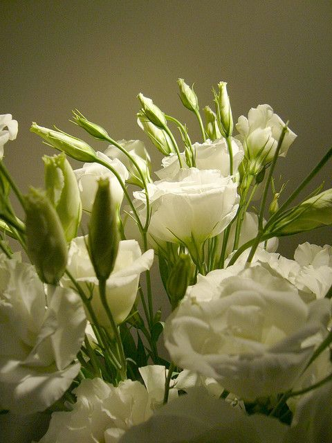 Lisianthus 2 pinterest flowers flowers garden and gardens perfume dos sonhos flower nameswhite mightylinksfo Image collections