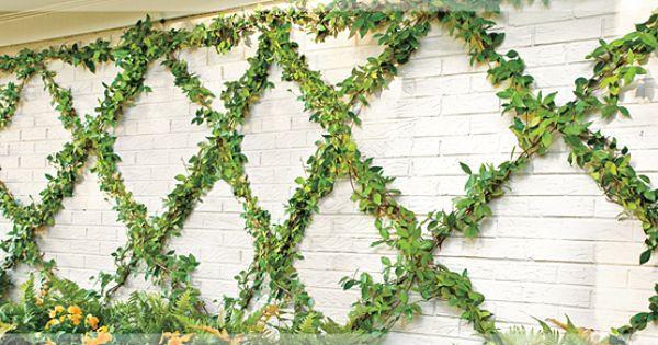 Flexible Garden, Decorative Patterns, Exterior, Training Vines, Vines Grown, Vine Training