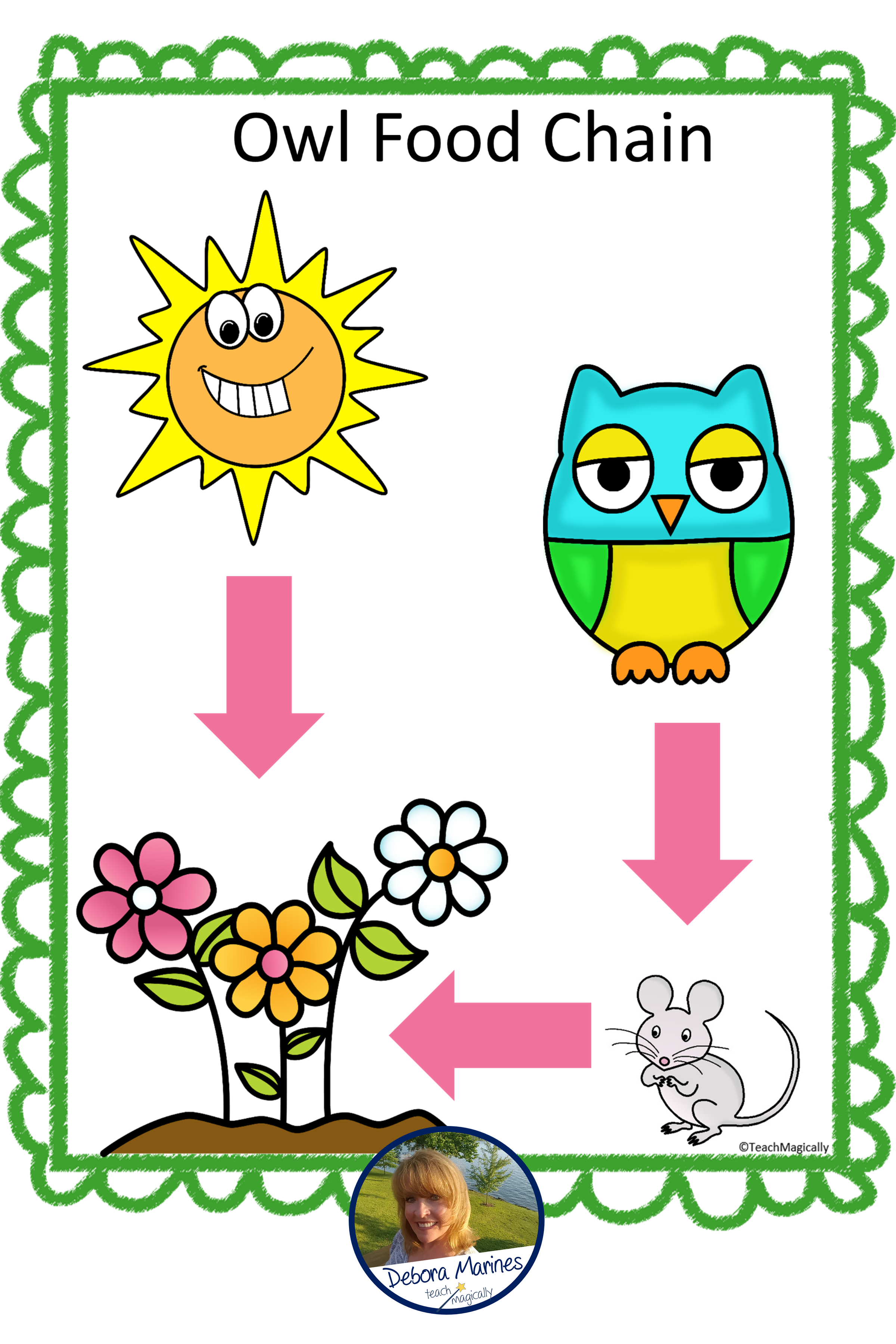 STEM Activities and Challenge Owl Food Chain Game Owl