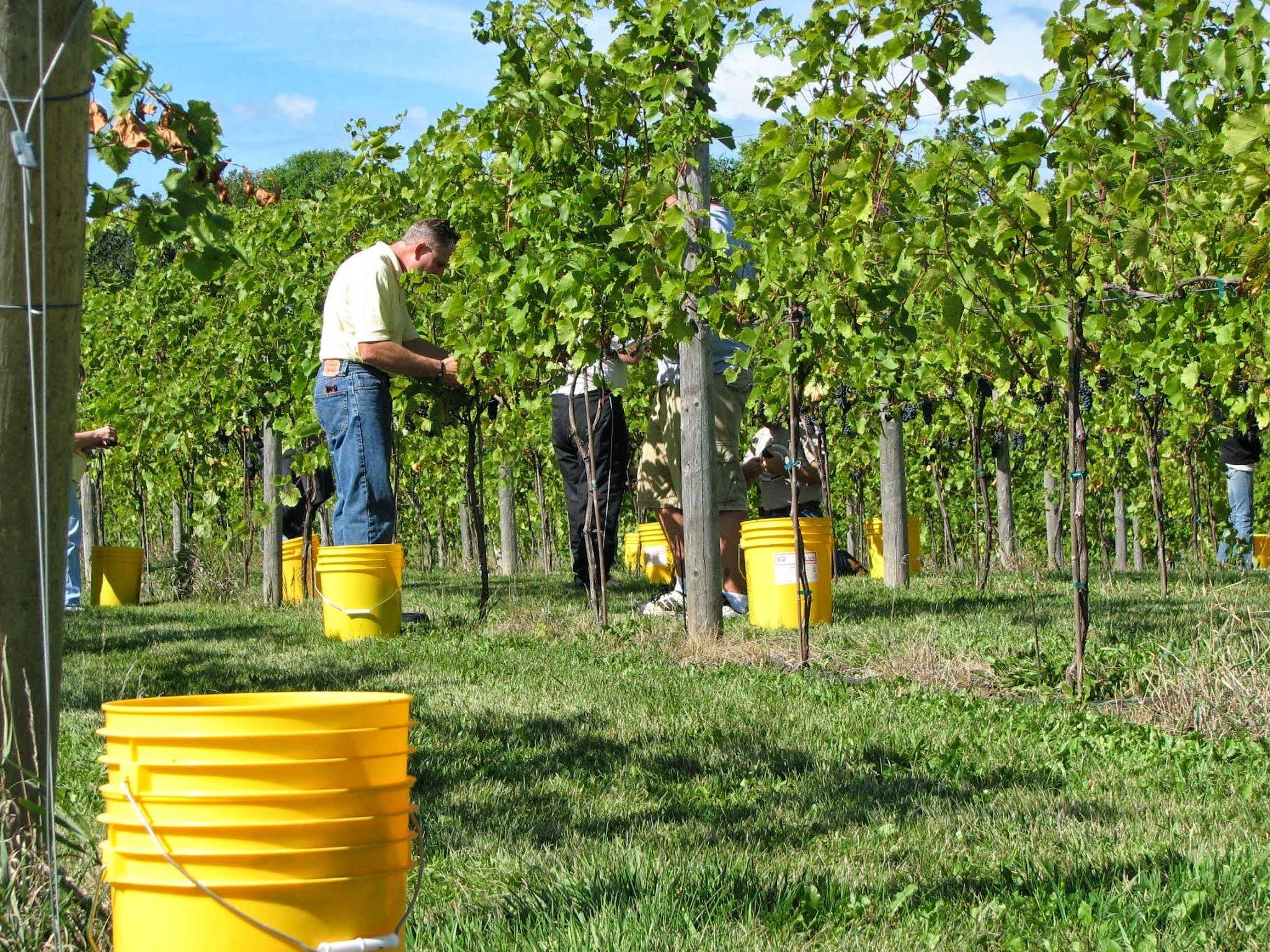 Whispering Oaks Winery >> Whispering Oaks Winery In Melrose Mn Www Minnesotawinepassport