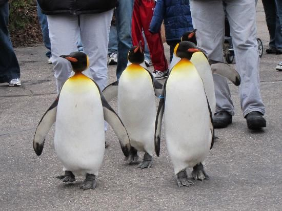 Cincinnati Zoo & Botanical Garden: the penguin walk