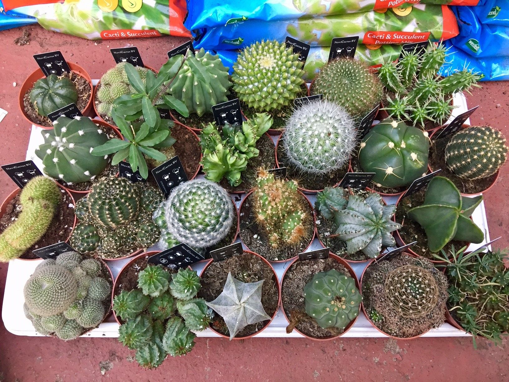 New Arrivals Cacti Urban Plant Life Garden Centre Dublin