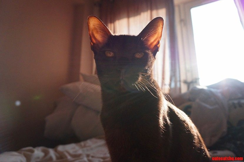 Indie in the afternoon sun. - http://cutecatshq.com/cats/indie-in-the-afternoon-sun/