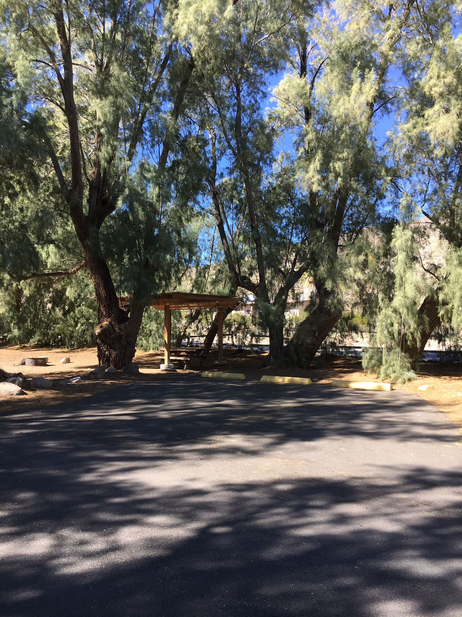Tamarisk Grove Campground Anza Borrego State Park