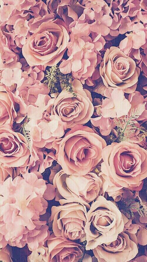 My Favorite Color Light Pink Flowers Iphone De Fundo Wallpaper Iphone5 Papel De Parede Para Iphone