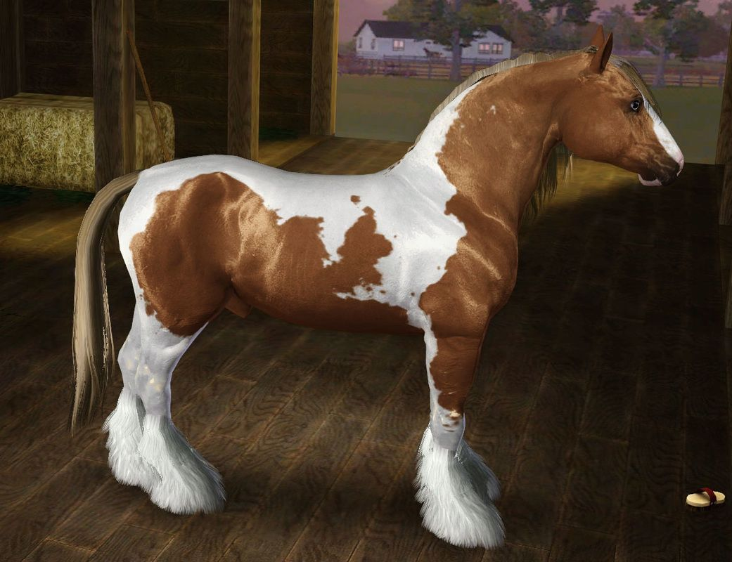 Horse Breed Templates Horse breeds, Horses, Breeds