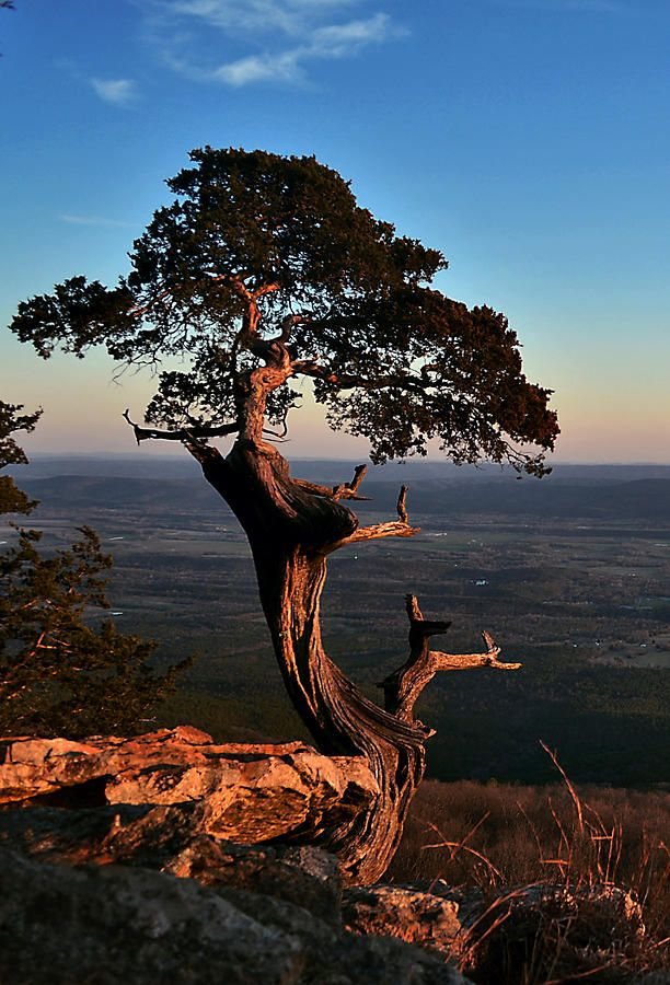 The Famous Tree At Mount Magazine State Park Arkansas World Photography Beautiful Landscapes Famous Trees