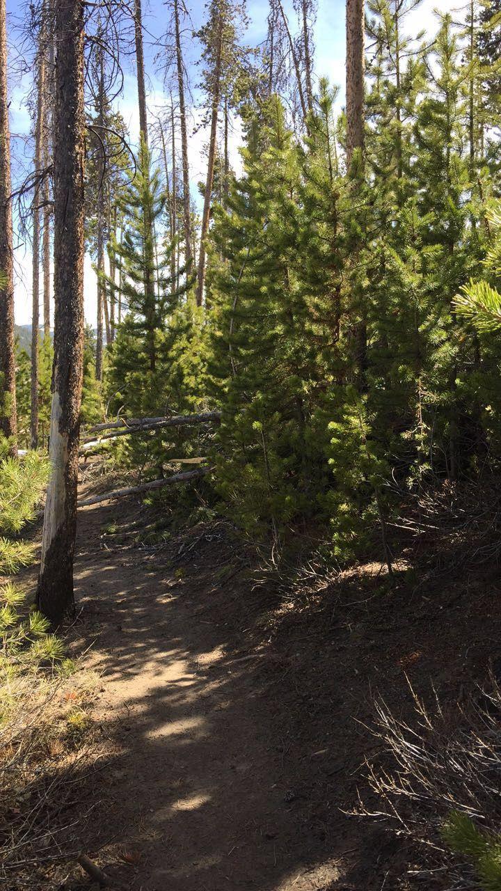 Lake Dillon Trails