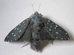 「美しい蛾」の画像検索結果