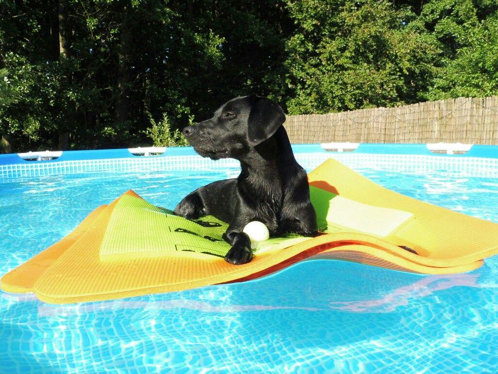 Dog raft, Above Pool, dog pool | Doug & Duke | Dogs, Pets, Funny animals