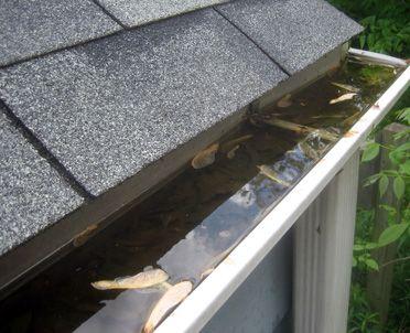 Standing Rainwater Breeds Mosquitoes Gutters Cool Roof Rain Gutters