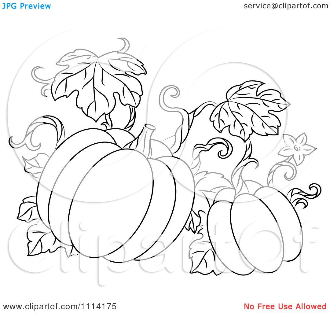 Clipart Outlined Pumpkin Vine